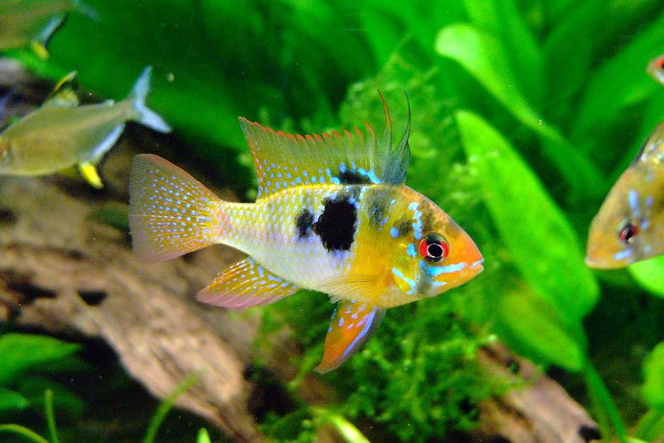 Alles was es über die Haltung von Fische zu wissen gilt