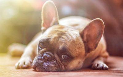 Hunde – des Menschen bester Freund